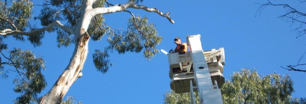 arborist Adelaide