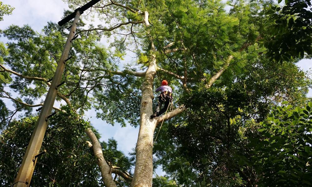 arborist adelaide SA